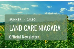 Newsletter Summer 2020